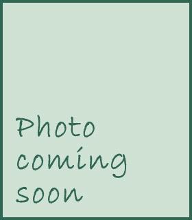 Berberis thunbergii 'Crimson Pygmy'
