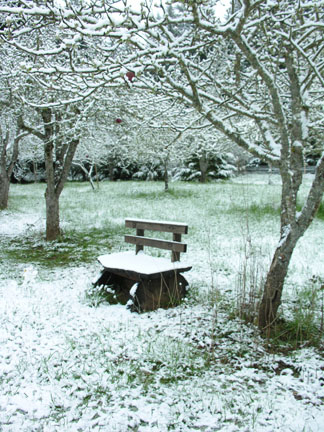 Bench in the apple orchard.